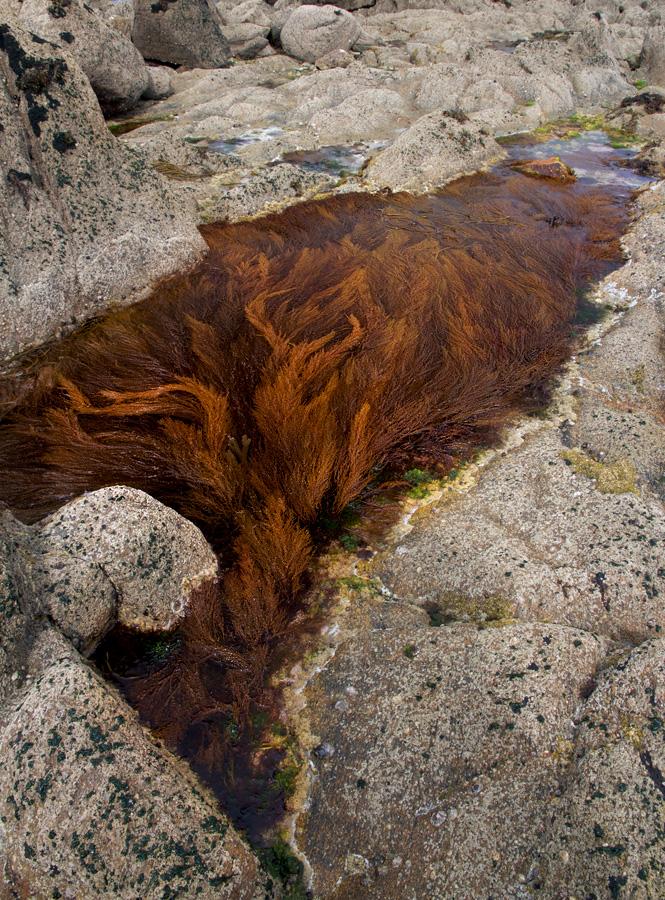 Bretagne - Algae pond