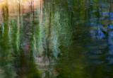 Soul of a pond /2