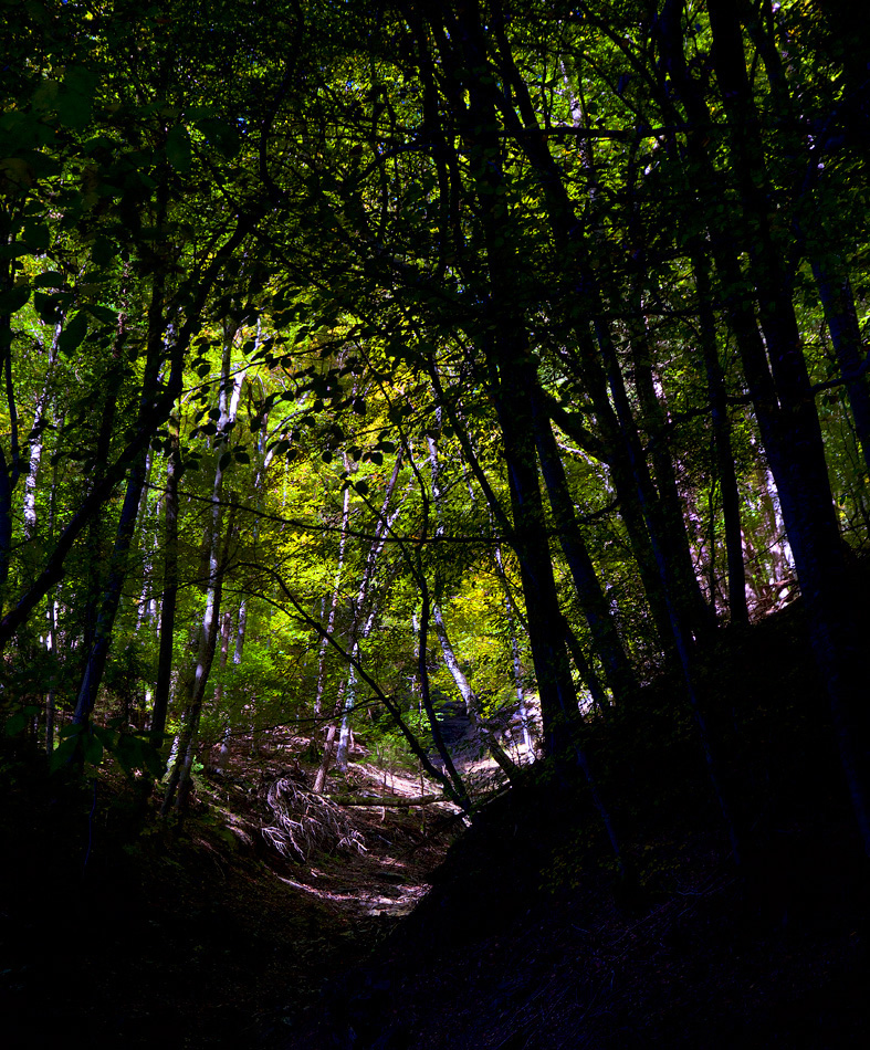 Tunnel into autumn